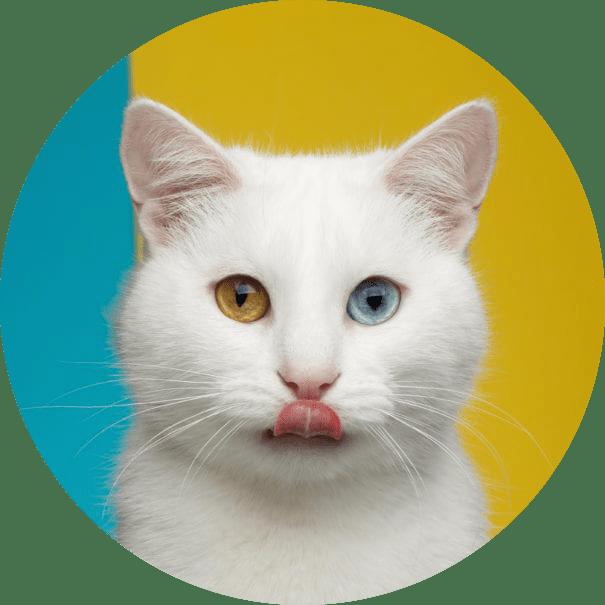 block-cat