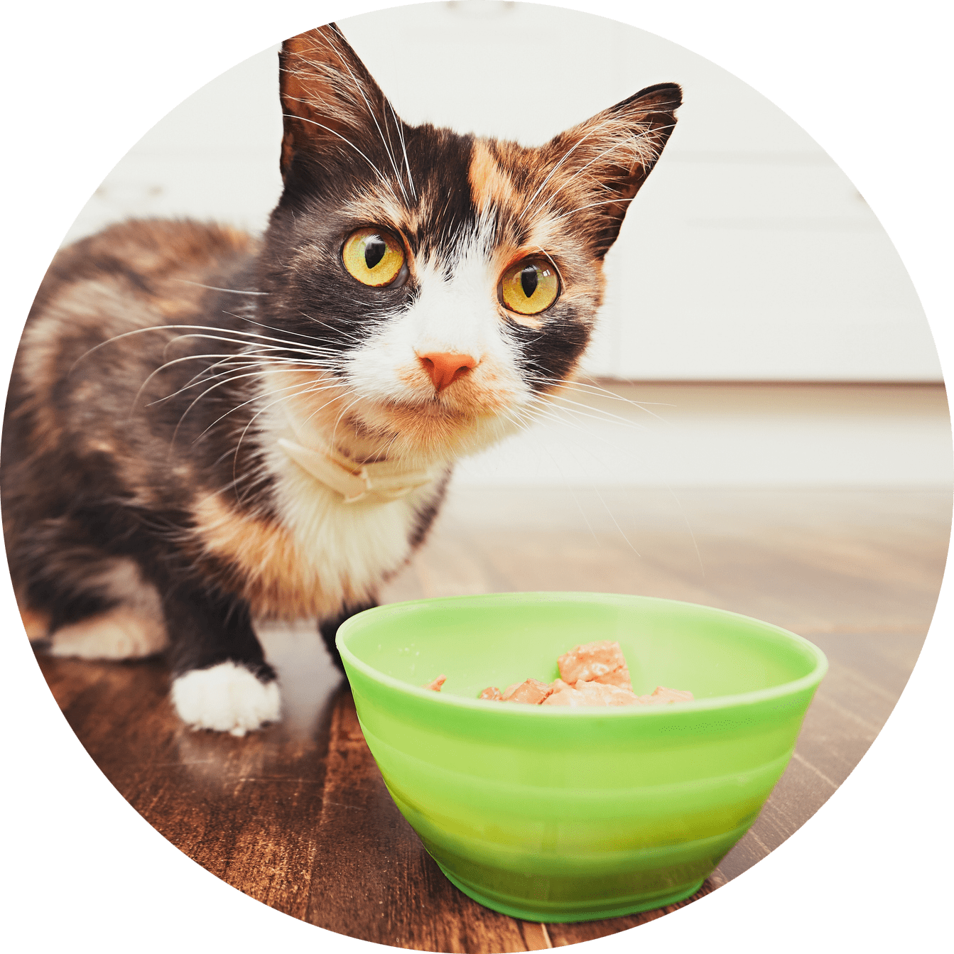 nutritious food for you feline by ruff life of illinois