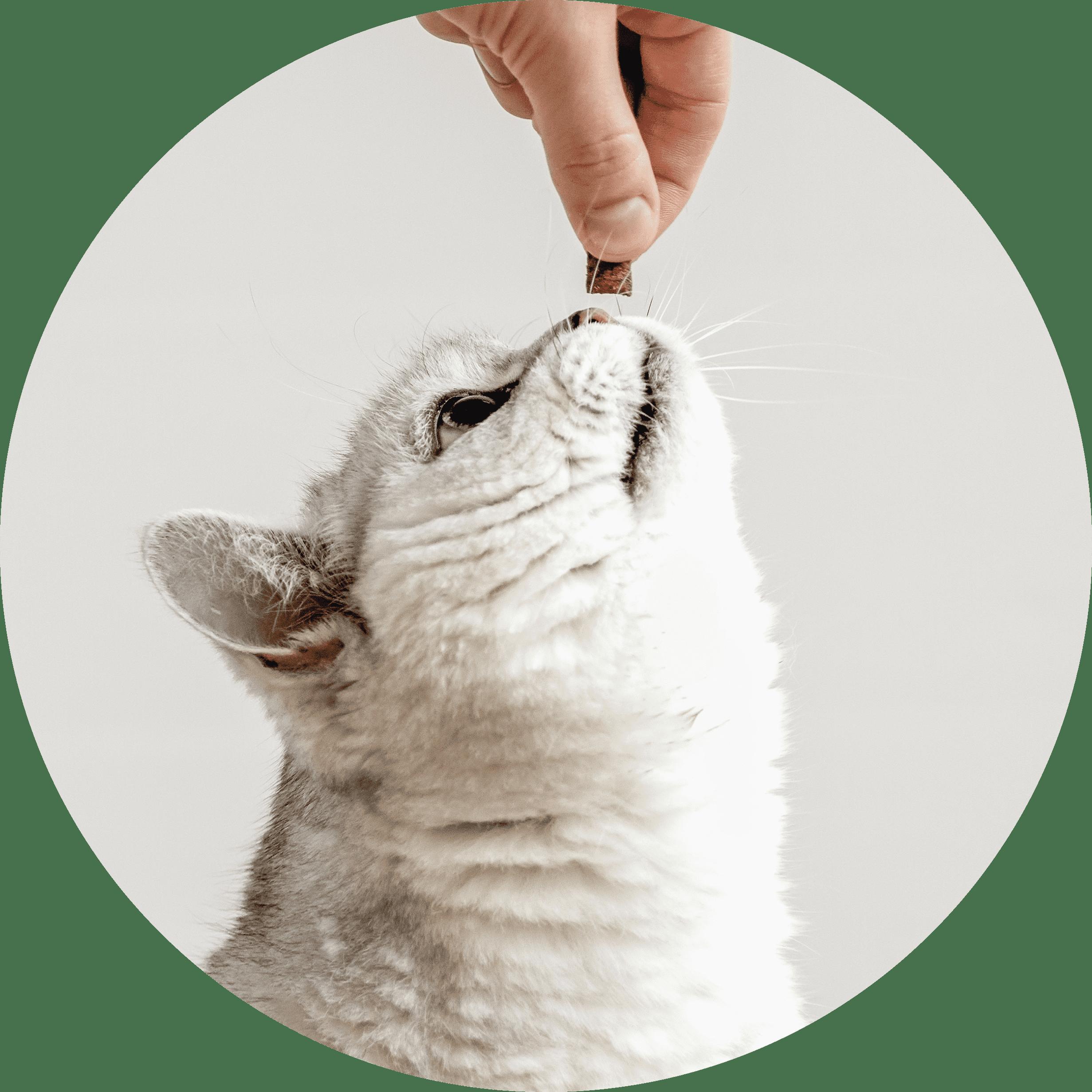 shop premium cat treats from ruff life in illinois