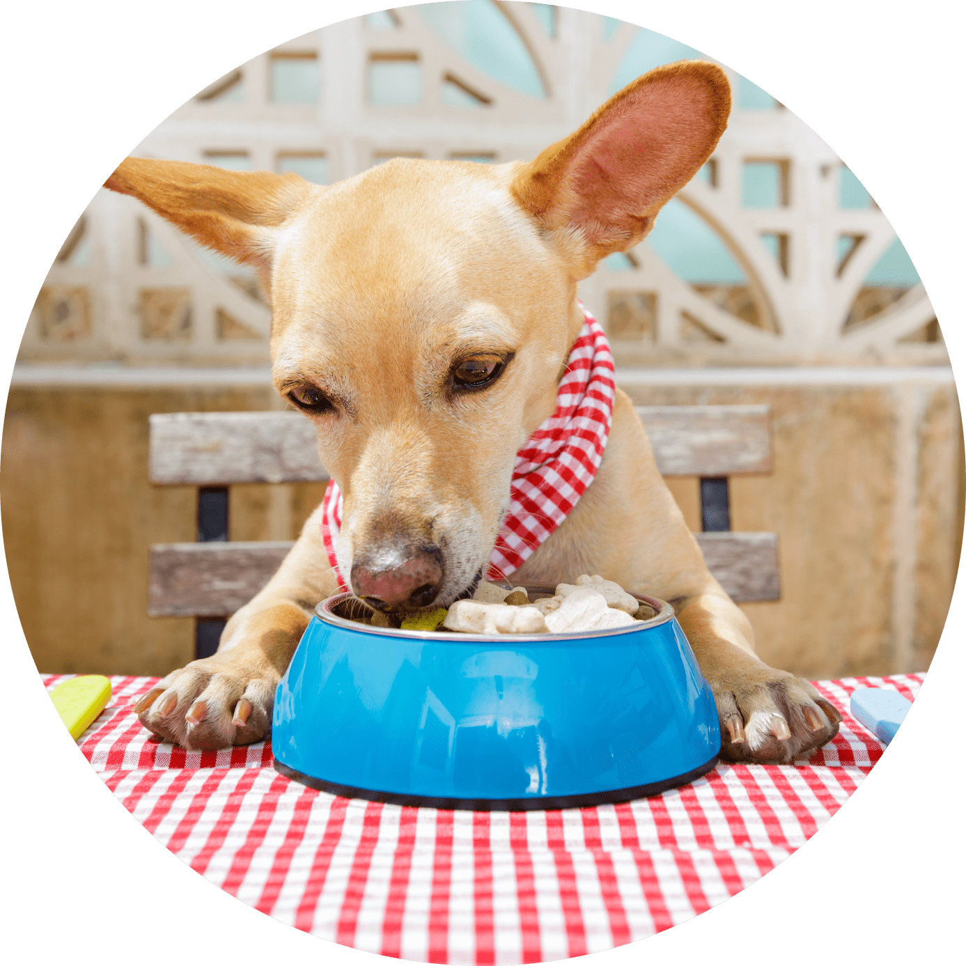 healthy pet for for your pup by ruff life of illinois