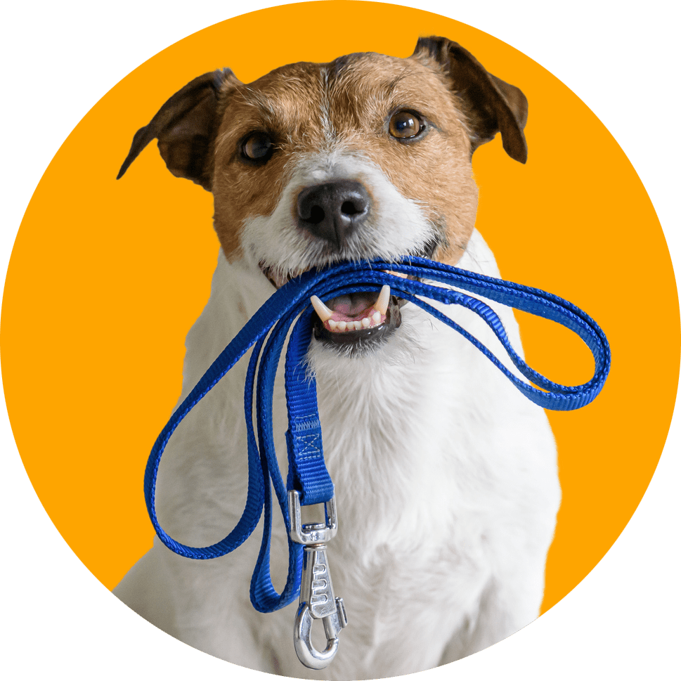 ruff life provides ral food and natural treats for your pets